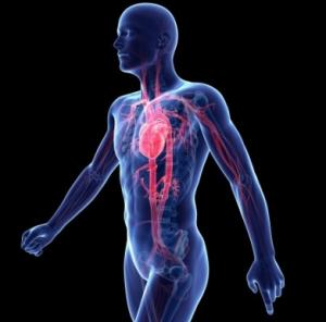 negativnoe-vliyanie-alkogolya-na-organizm-cheloveka-heart